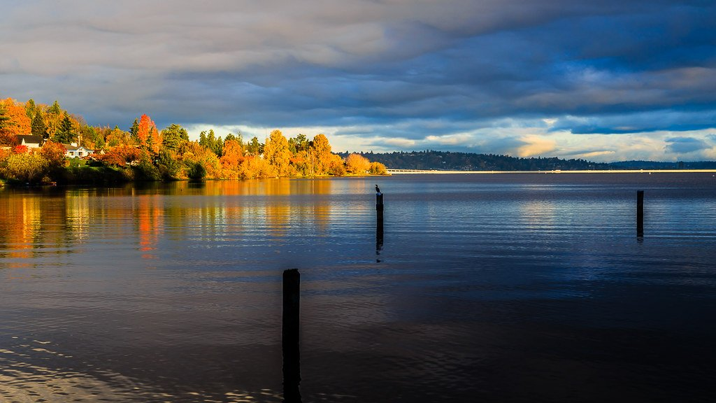 Early morning sunshine dances on the surface of Lake Washington casting a golden hue all over the water and trees.