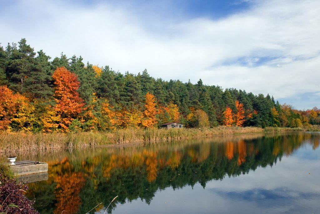 Fall foliage trees reflect in a calm lake hiking in Toronto, ON