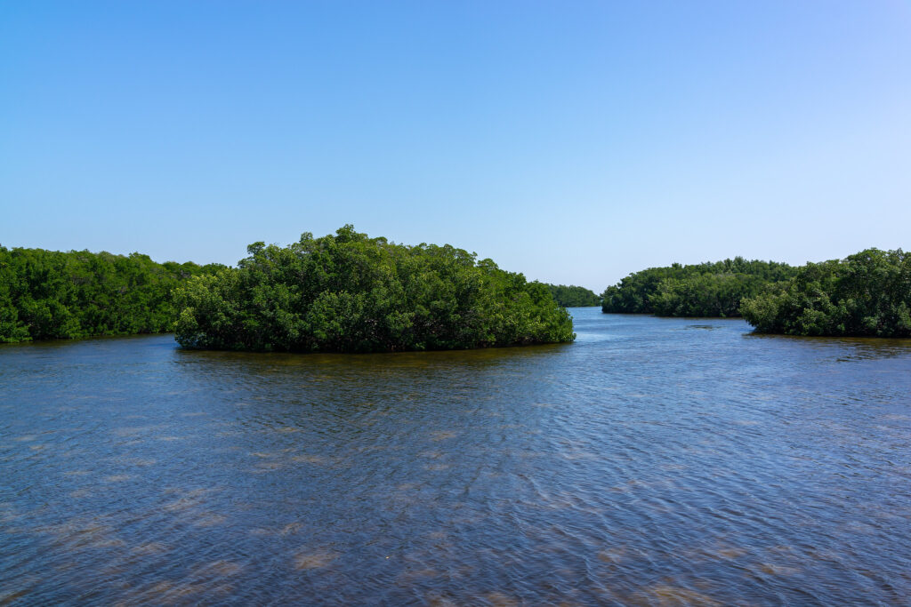 mini islands are a cool feature to explore while canoeing and kayaking in Tampa Bay