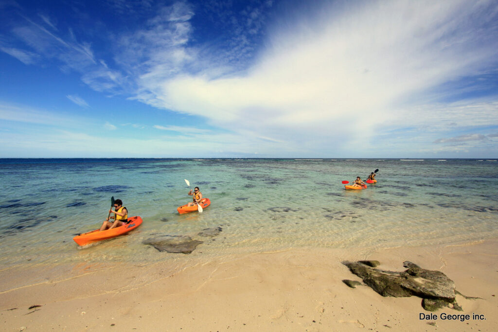 shallow seas are a beautiful place to go kayaking near Tampa Bay