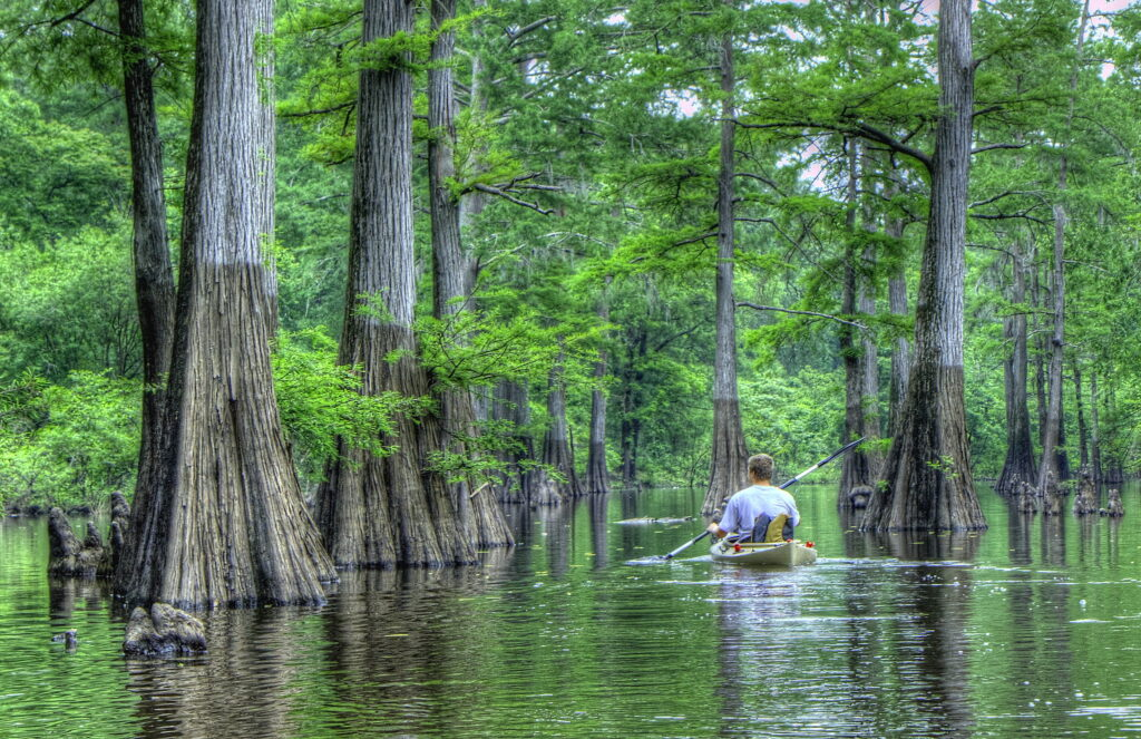 kayaking in baltimore through the cypress forests